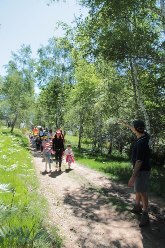 AIB festa degli alberi 2014-20